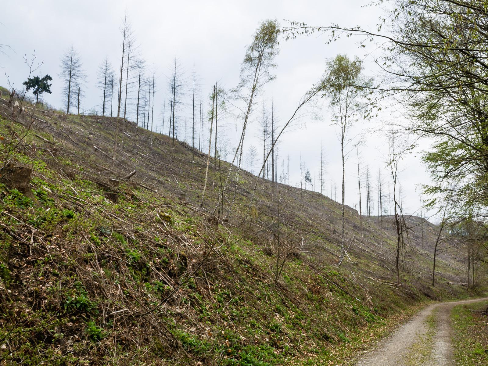 """""""noch 10 Jahre Bäume schlagen"""""""