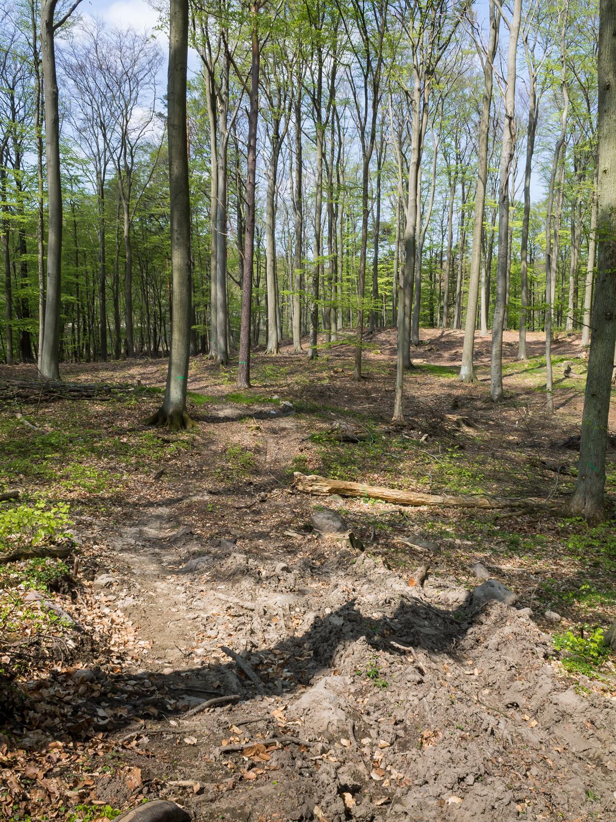 Rückegasse und Baumstümpfe