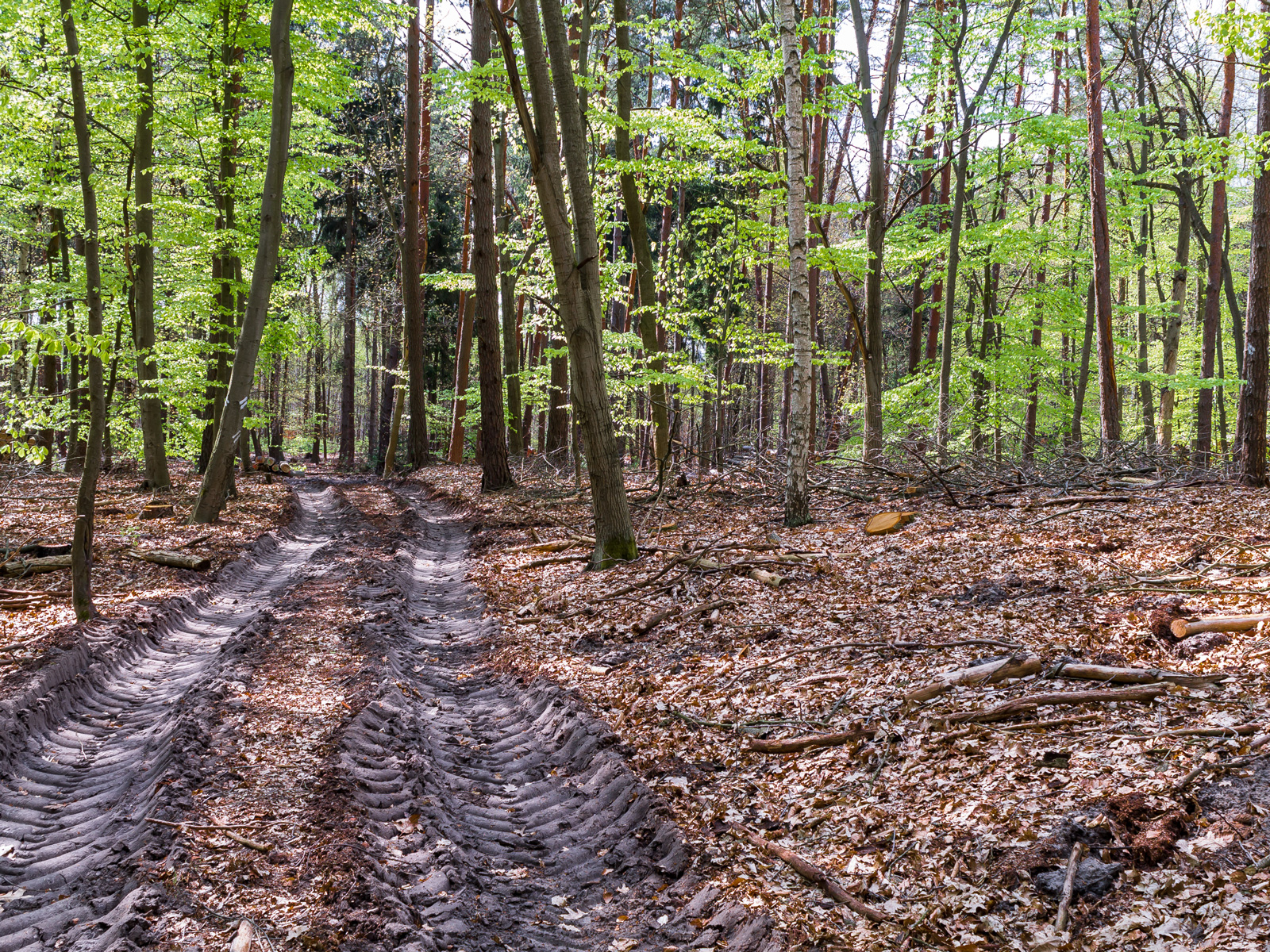 Rückegasse mit verdichtetem Waldboden