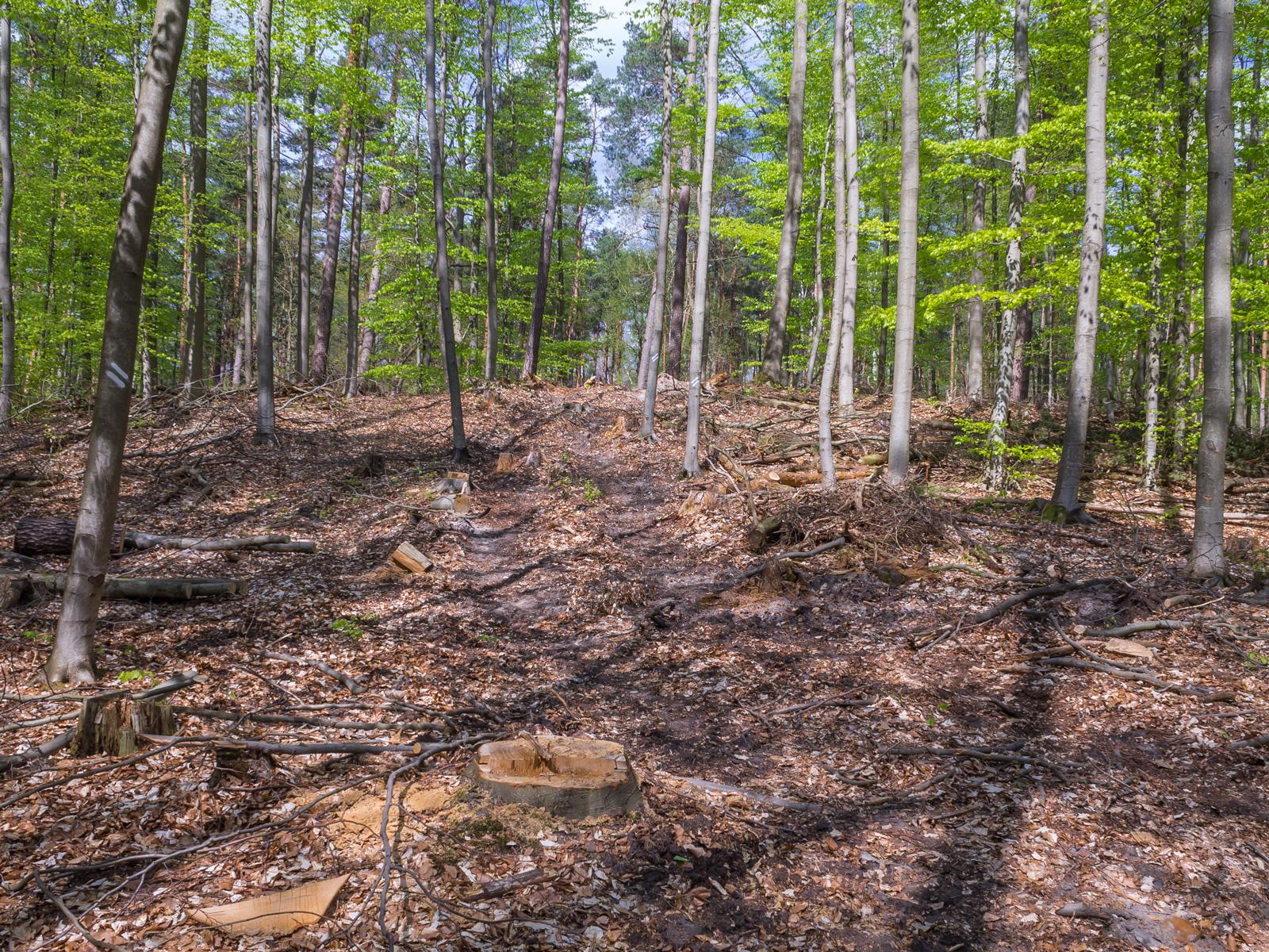 Rückegasse und überall Spuren des Holzeinschlags
