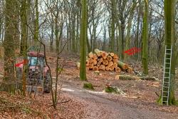Holzrausch im Brinkmannsfeld