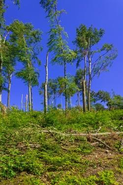 Reste des Schellenberger Schirmschlag-Walds
