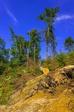 verwüsteter Schirmschlag-Wald