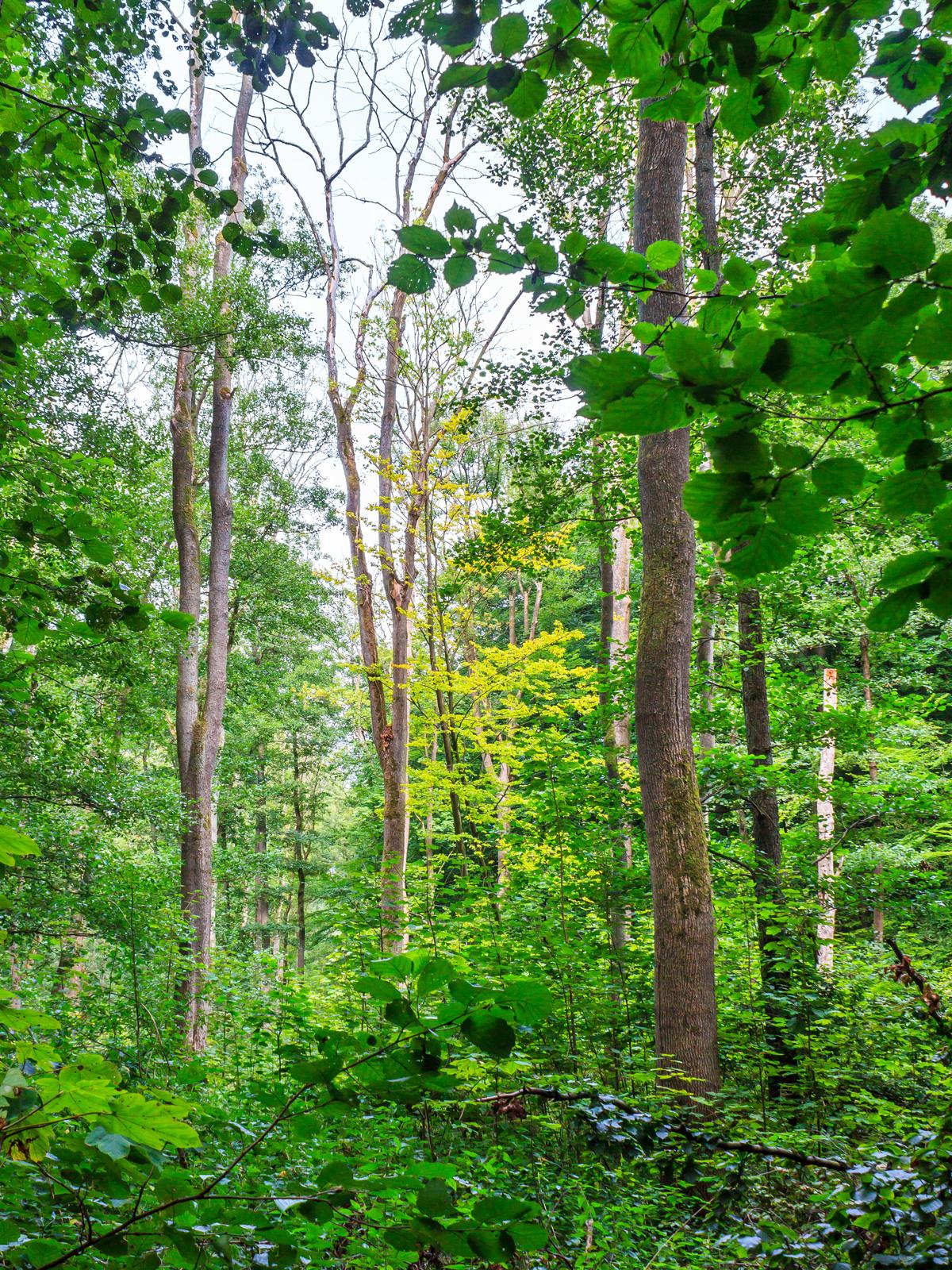 Biotopbäume im Sumpf