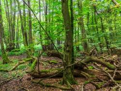 Totholz im Erlenbruchwald