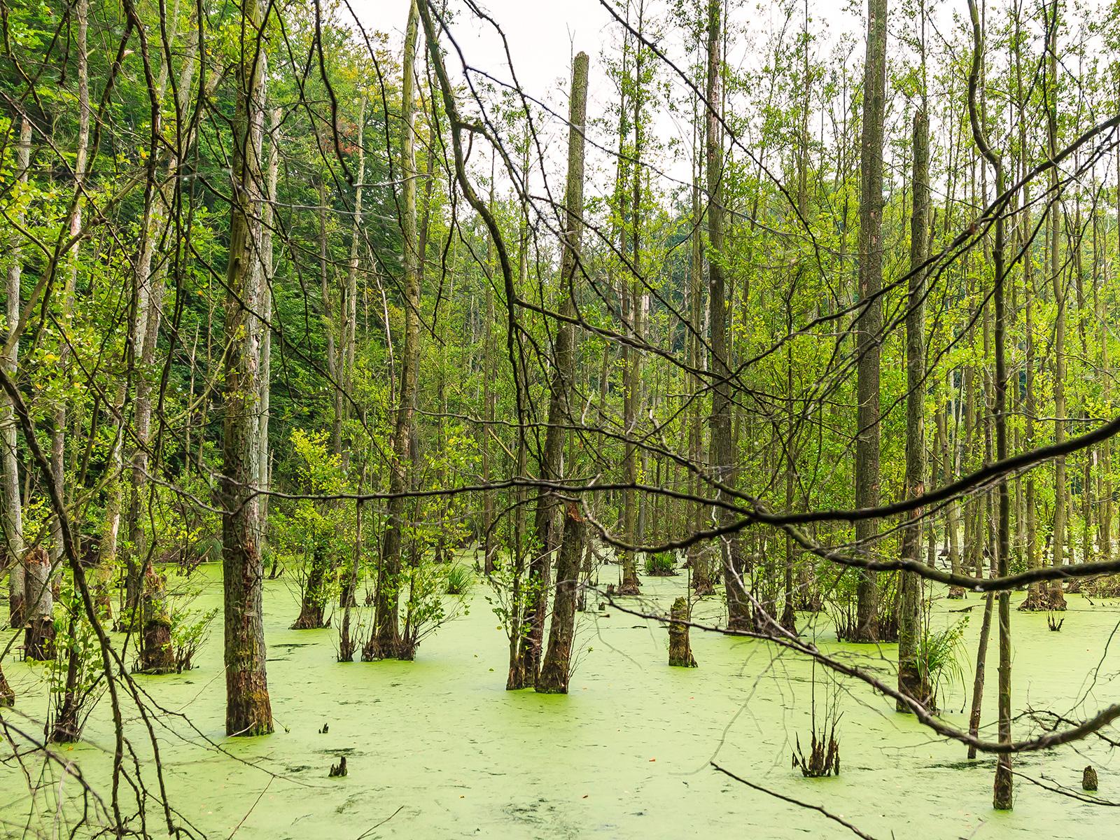 Erlen-Bruchwald mit hohem Anteil an Biotopbäumen