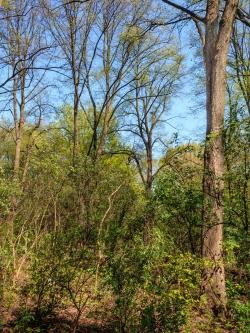 riesige alte Linden im Hintergrund