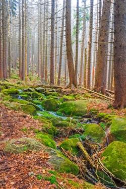 Kellbeckbach im abgestorbenen Fichtenwald