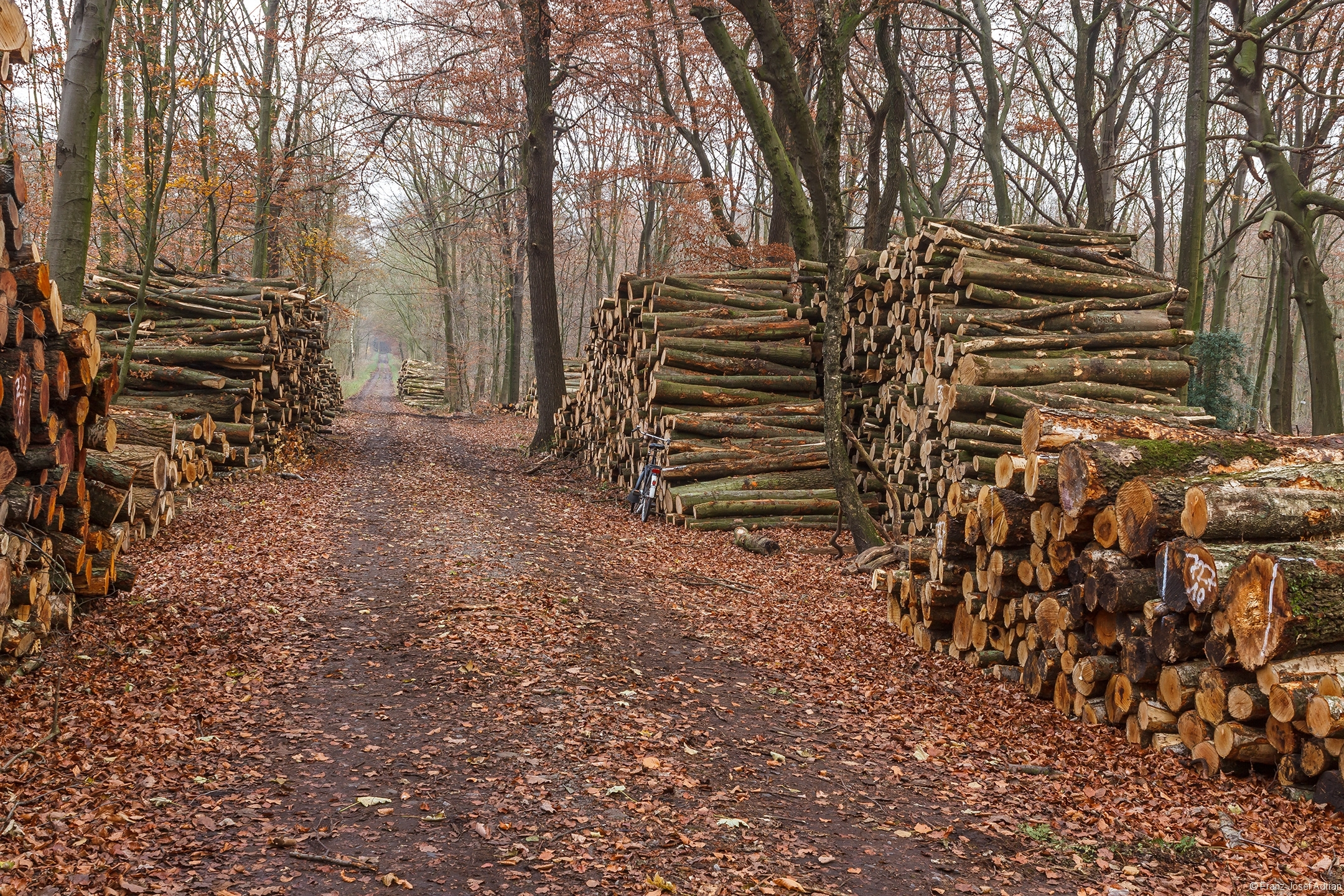 Holzpolter im Fernewald