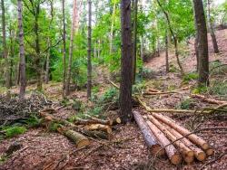 Resultat: ein extrem holzarmer Wald