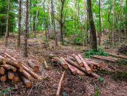 Resultat: schiefe und krumme Bäume