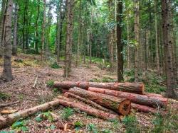 ein Wald wie Kraut und Rüben