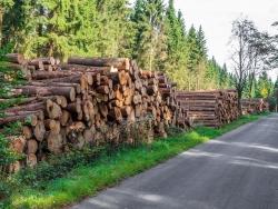 Holzpolter an der Straße