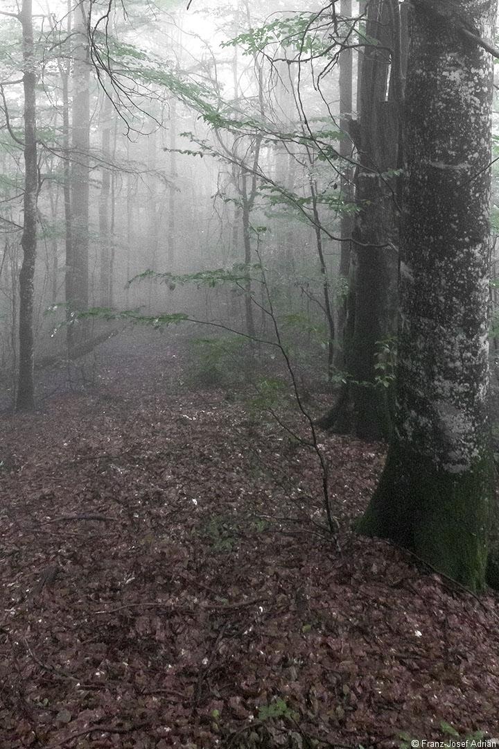 Fontynyasy_Nebel_04_1080