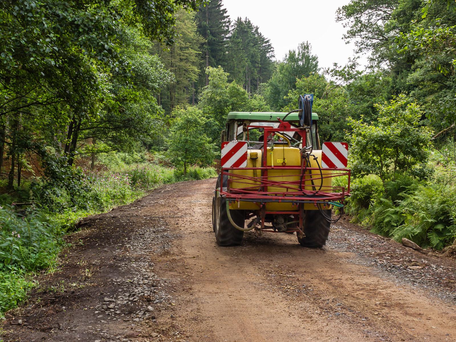 neuer Forstweg nach Steinborn