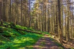 Forstweg zum Holzlagerplatz, Blickrichtung Westen