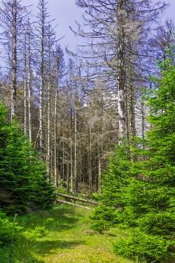 alter Forstweg nach Corneliaklippen