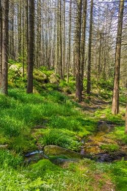 am Ende des Forstwegs: der Kellbeckbach
