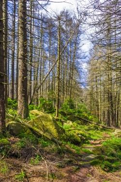 Einstieg in den mittleren Abschnitt zwischen den beiden liegenden Baumstämmen