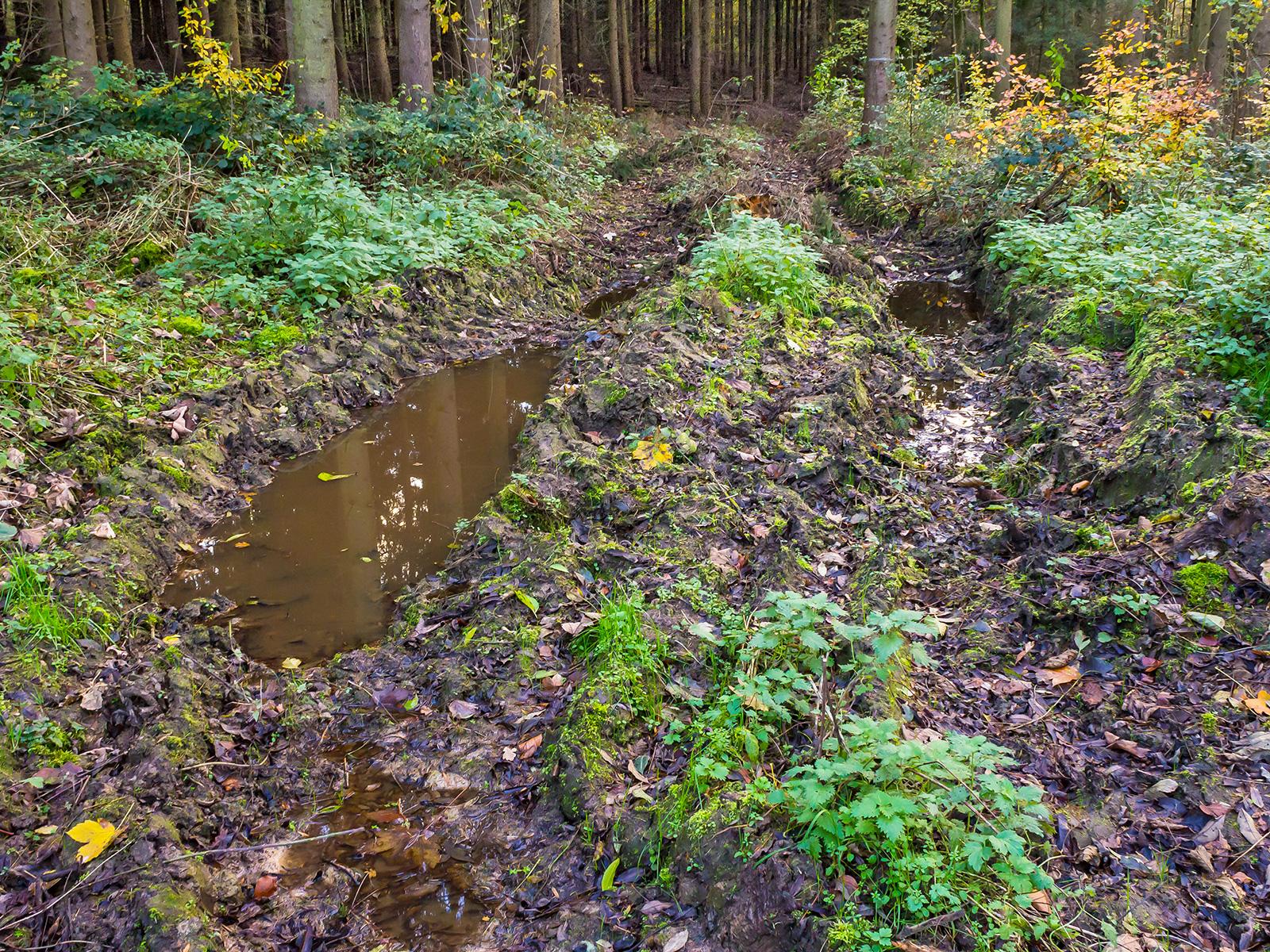 Rückegasse mit Bodengleisen im Harrl