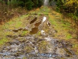 vernässte und verschlammte Rückegasse im Douglasienwald