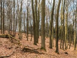 gemischte Alterklassen im Naturwald