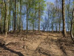 Durch Rückegasse zerstörter Waldboden