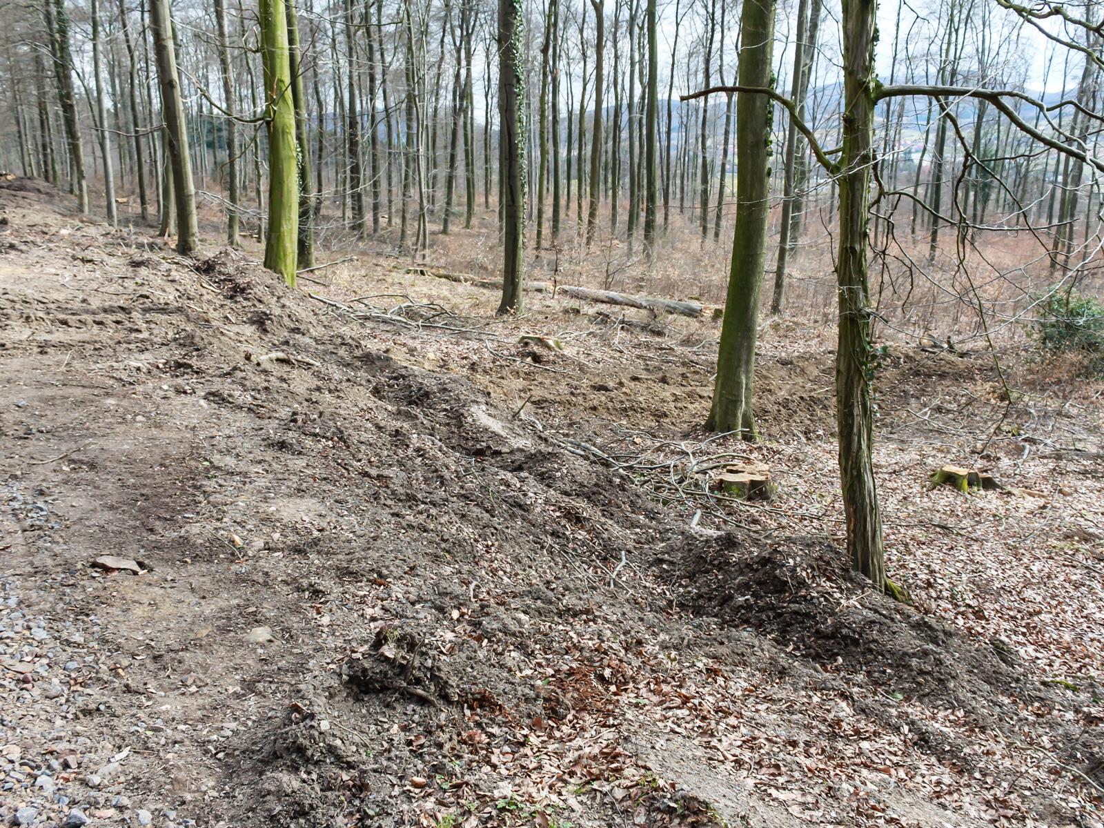 Verdichtung und Zerstörung des Waldbodens