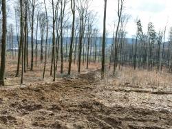 weite kahlgeschlagene Flächen, aufgewühlter Waldboden