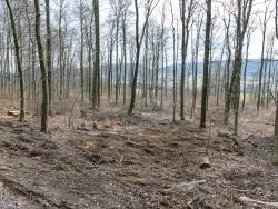 verwüsteter Waldboden, holzarmer Wald