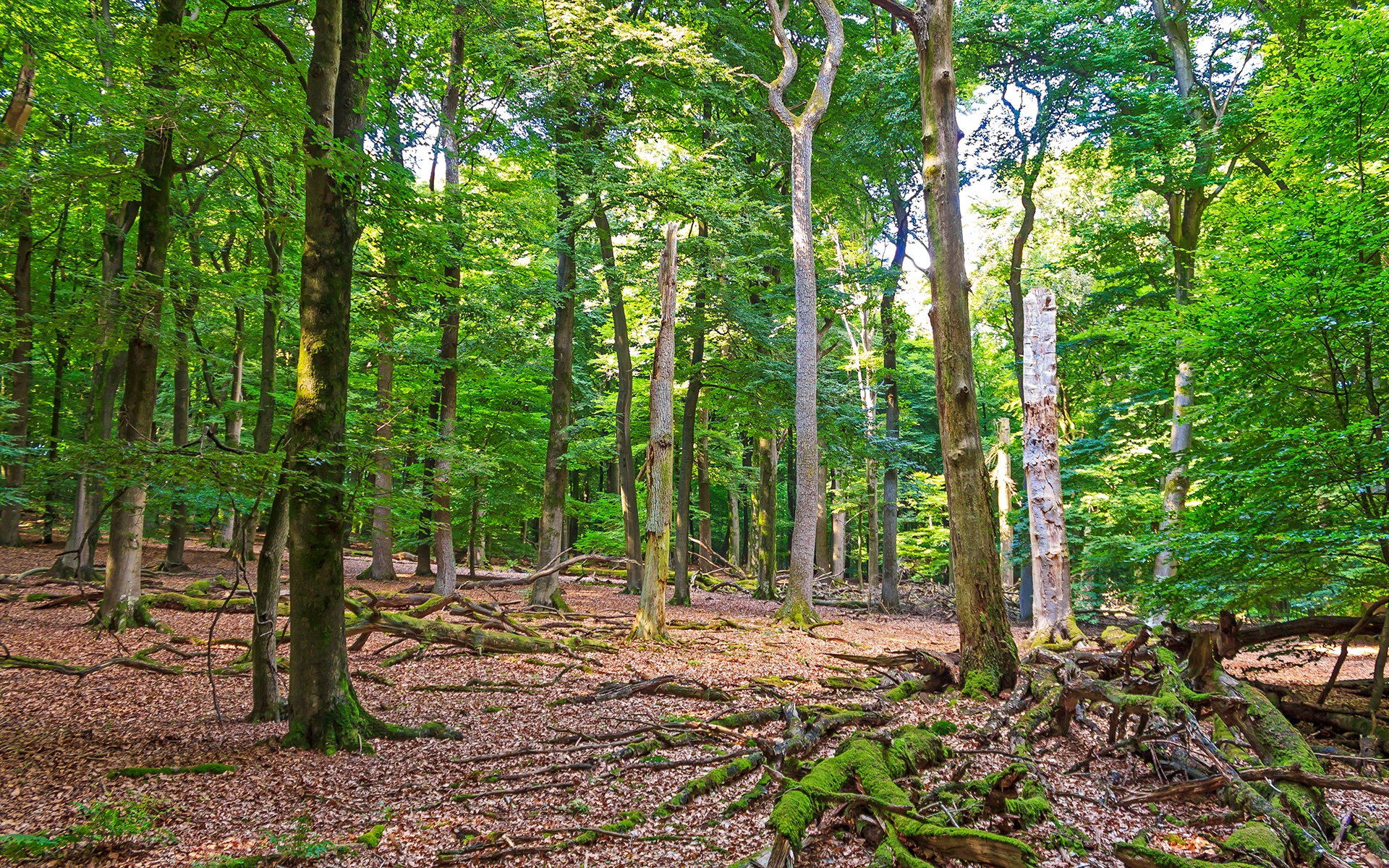 Totholzreichtum in unbewirtschaftetem Wald