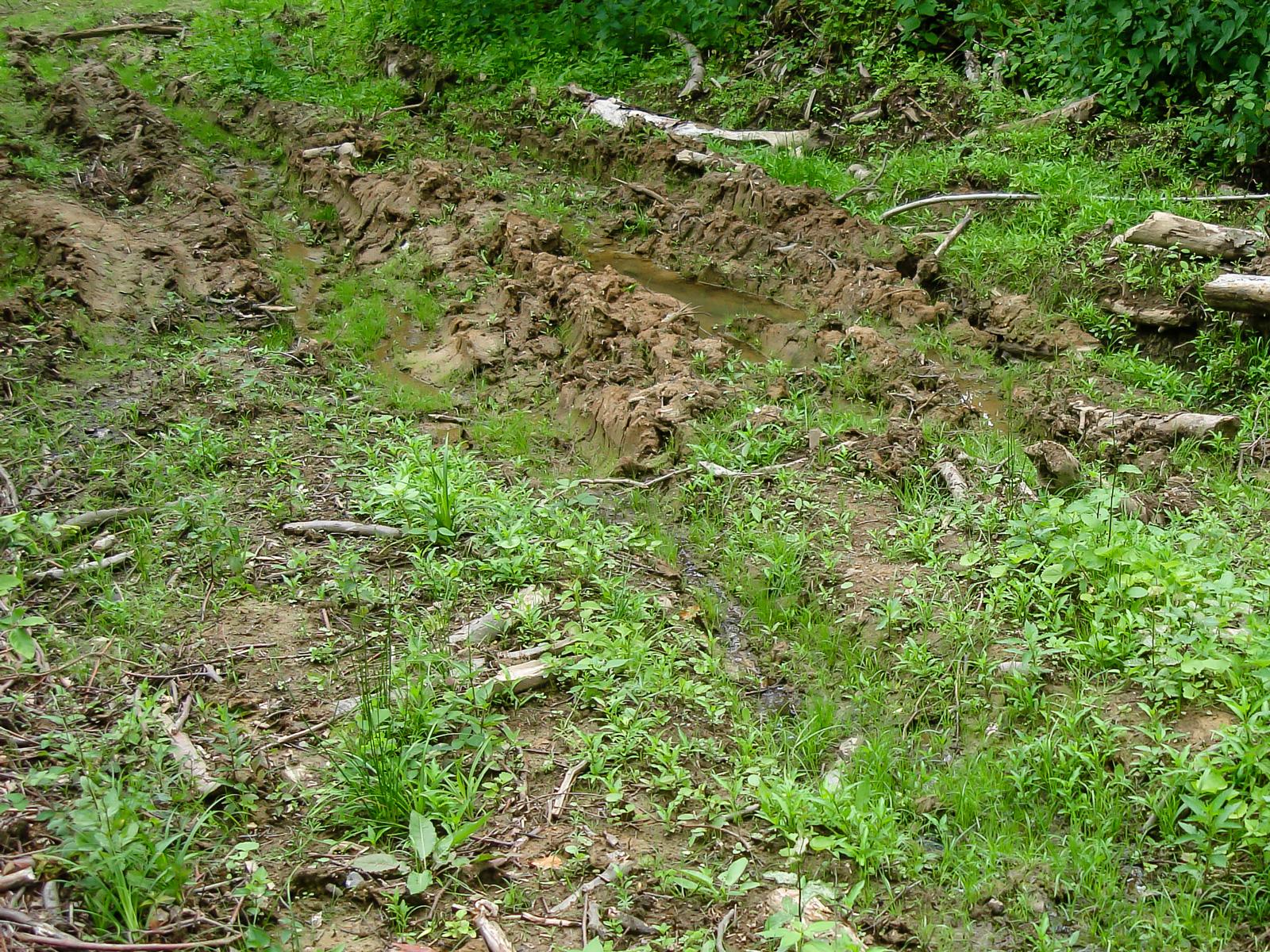 Biotop für Bergmolche und Erdkröten