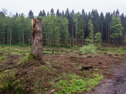 Großkahlschlag mit Wegmarke am Baumstumpf