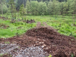 große Bodenschäden in Rückegasse