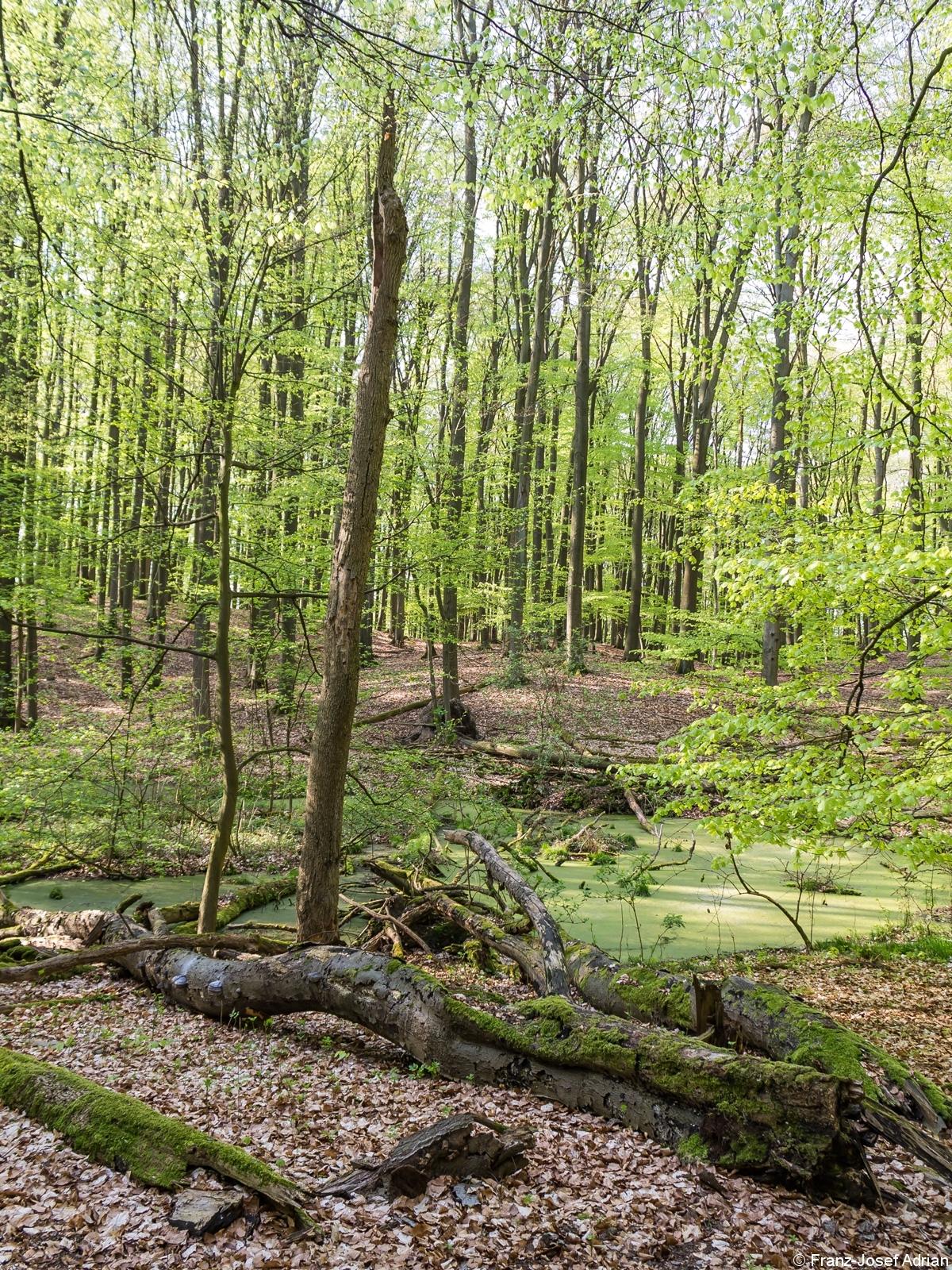 Liegendes Totholz vor Tümpel