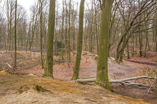 im Vordergrund: 3 Habitatbäume auf degradiertem Boden