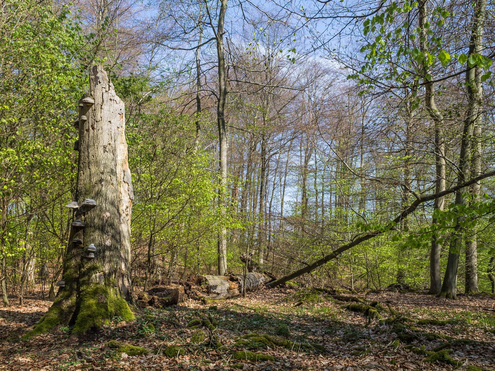 200 Festmeter Totholz pro Hektar