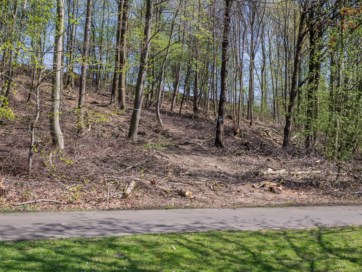 Schöne alte Bäume wurden für die Rückegasse gefällt