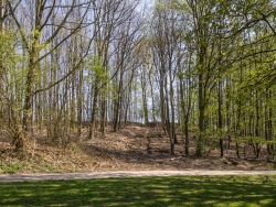 Rückegasse mit verdichtetem und zerstörtem Waldboden