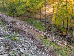 """""""Natürliche Wald- und Wasserlebensräume - das ist das Ziel dieses Projektes."""""""