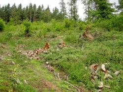 """Buchenwälder werden """"grundsätzlich"""" erhalten"""