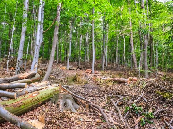 holzarmer Wald