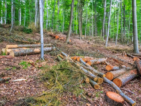 freigeschlagener Waldboden