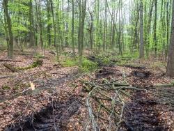 Rückegasse, tiefe Reifeabdrücke und Holzabfall
