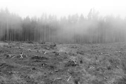 Großkahlschlag ohne Birkenverjüngung nahe Ernstburg