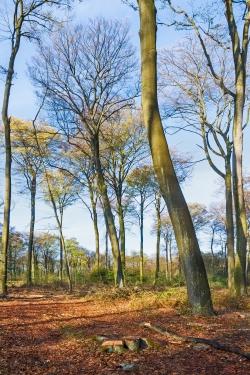 Vorbild: englischer Landschaftspark