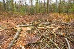 Verwandlung eines Waldes in Kronenabfall