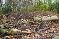 Überreste des ehemaligen Buchenwaldes