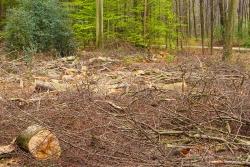industrielle Holzernte im Naherholungswald