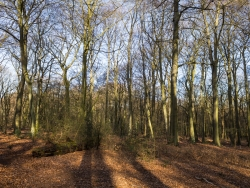 Naturwaldzelle Hiesfeld